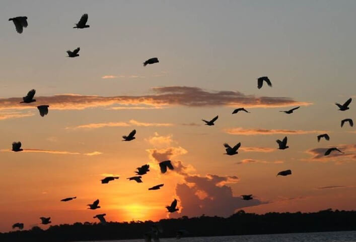Cockatoo flight at sunset_Peter Widmann